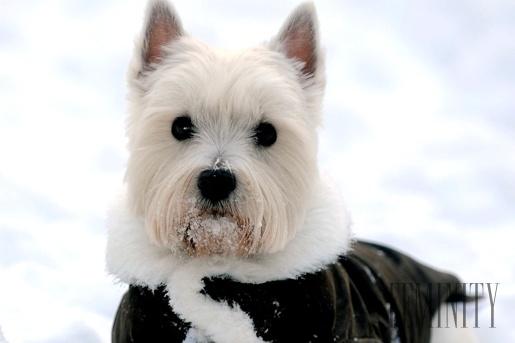 4c98ed24d9b4 Skôr než zvieratám uľahčujú zimné venčenie ich pánom.